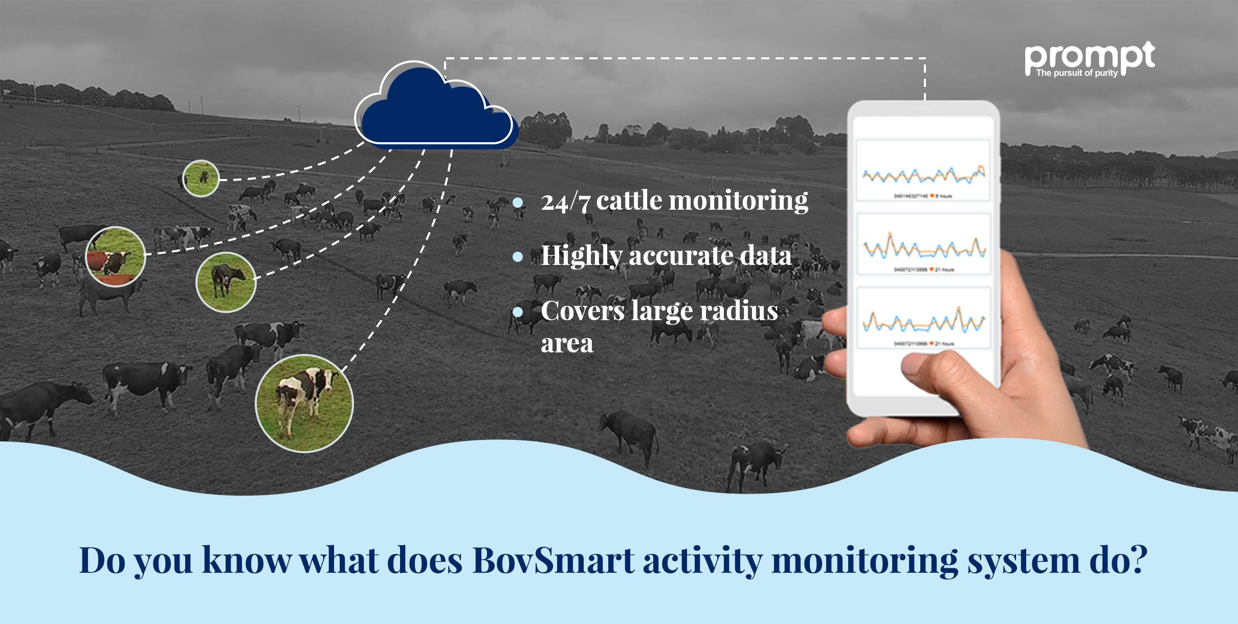 BovSmart - Cattle monitoring system